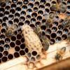 Cuidemos las abejas