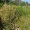 En peligro de secarse muchos árboles en El Fundadores