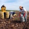 Apoyará Sedesol a jornaleros agrícolas y sus familias