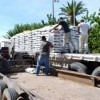 Ofrecen semilla subsidiada a productores locales