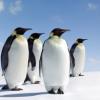 Reportan muerte de 150 mil pinguinos