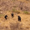 Busca policía a niños que quedaron atrapados en cerro