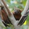 Los murciélagos no se enferman, te explicamos por qué