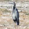 Empiezan a llegar aves migratorias al Vado de Meoqui