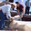 Ofrece municipio de Camargo cemento subsidiado
